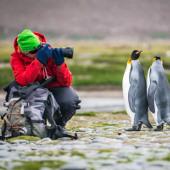photographing penguins - Falkland Islands - South Georgia - Antarctic Peninsula