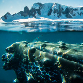 Whale - Antarctic Peninsula - Whale Watching Voyage