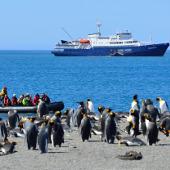 Coming ashore - Falkland Islands - South Georgia - Antarctic Peninsula