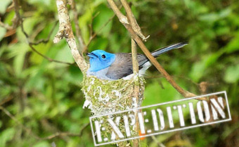 Taiwan Birding tour - Taiwan Bird Watching Holidays - Birding Taiwan - Taiwan Birding and Botany Expedition 2019
